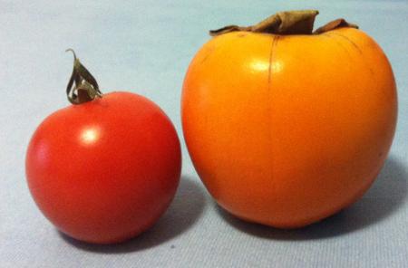 Links eine (kleine) Tomate und rechts meine gekaufte Kaki